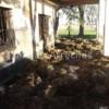 Incendio en una estancia cerca de Todd
