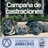 Más de 1000 animales castrados durante 2014