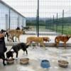 Elecciones 2015: Tana Di Palma creará el Refugio Municipal de Animales