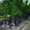 Llegan 300 árboles para su plantación en la zona del Rio