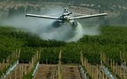 Un juez prohibió el uso de agroquímicos en Pergamino