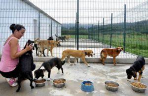 Refugio Municipal de Animales - Tana